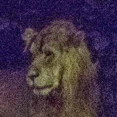 The color noise in this portrait has turned the background purple and hides the intricate patterns of the lion's mane.