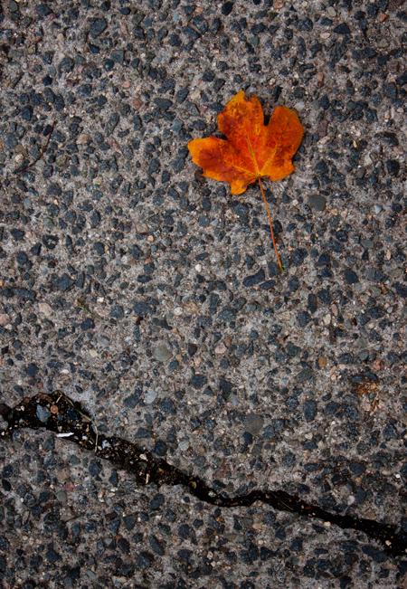 bright orange leaf for fall