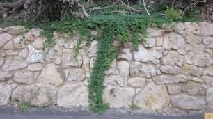 Port Campbell Bay Vine