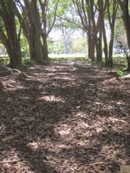 Dog Park leaf litter