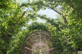 Hamilton gardens 14