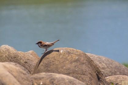 Lighthouse bird