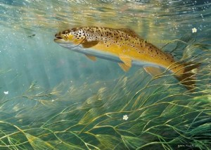 miller-trout-glycocalyx