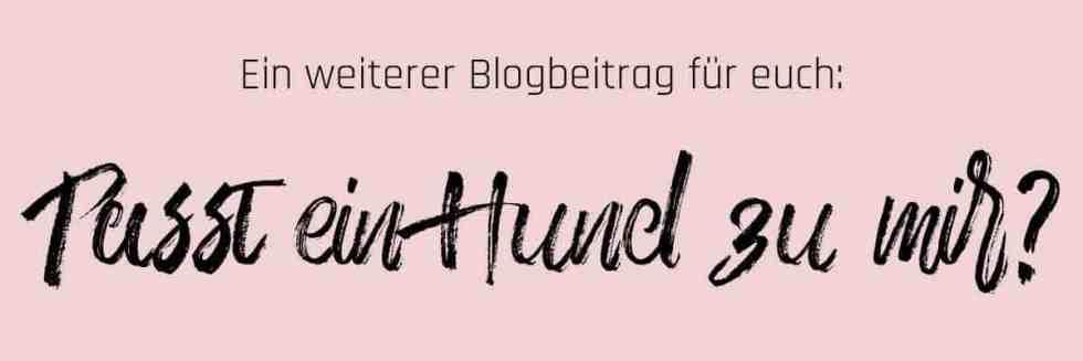 Banner_passt-ein-hund-zu-mir