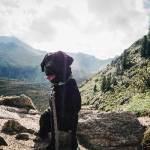 flummisdiary-zillertal-mit-hund