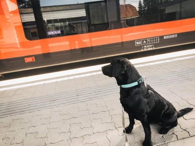flummi-faehrt-mit-dem-zug-zugfahren-mit-hund