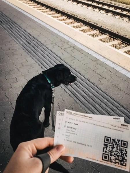 Zugtickets-zugfahren-mit-hund