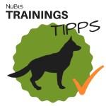 Trainingstipps-Tipps-für-dein-Hundetraining-Badge-Hundesport-Nubi.