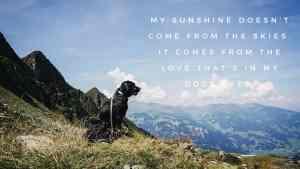 sunshine-desktop-flummisdiary