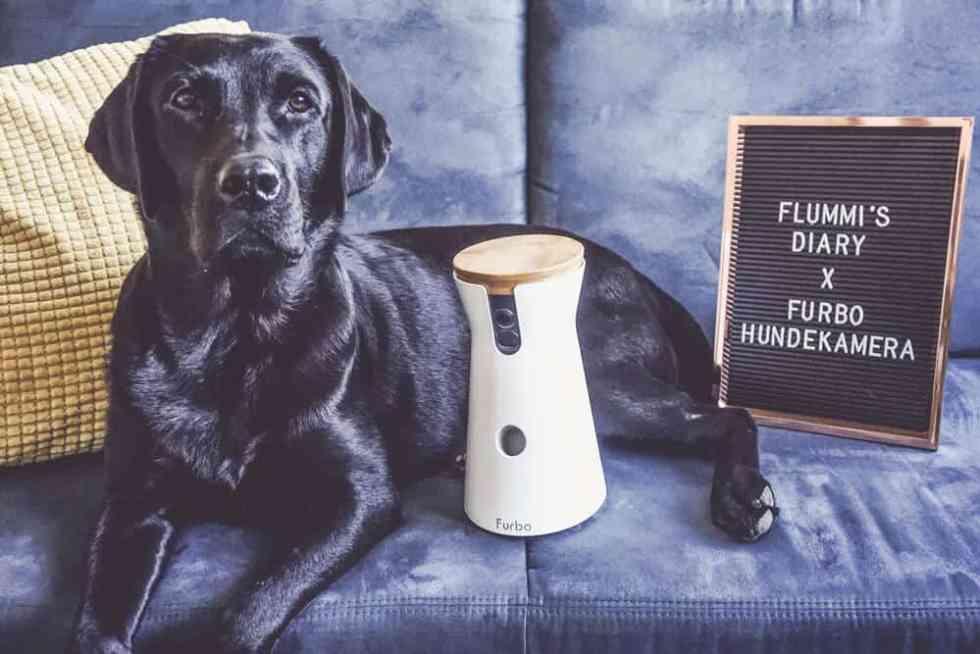 flummisdiary-furbo-hundekamera-testen
