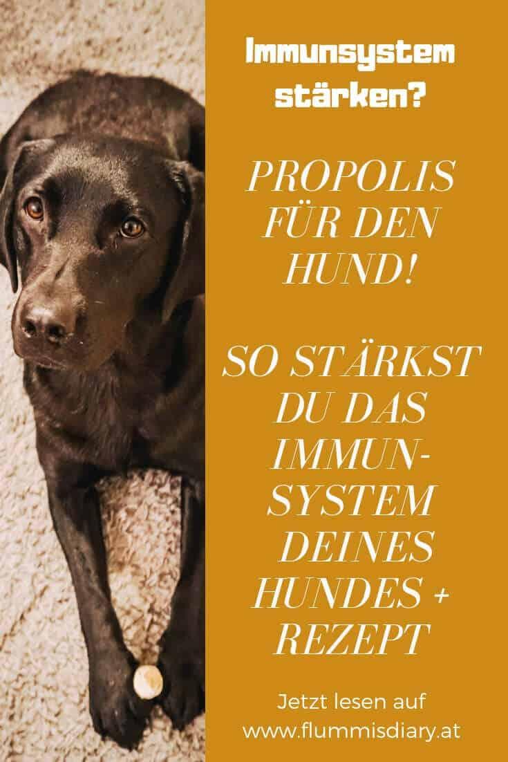 hunde-propolis-blog-tipps