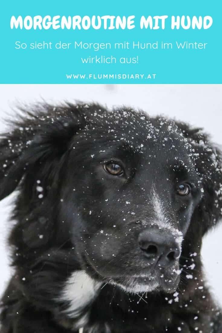 morgenroutine-winter-hund