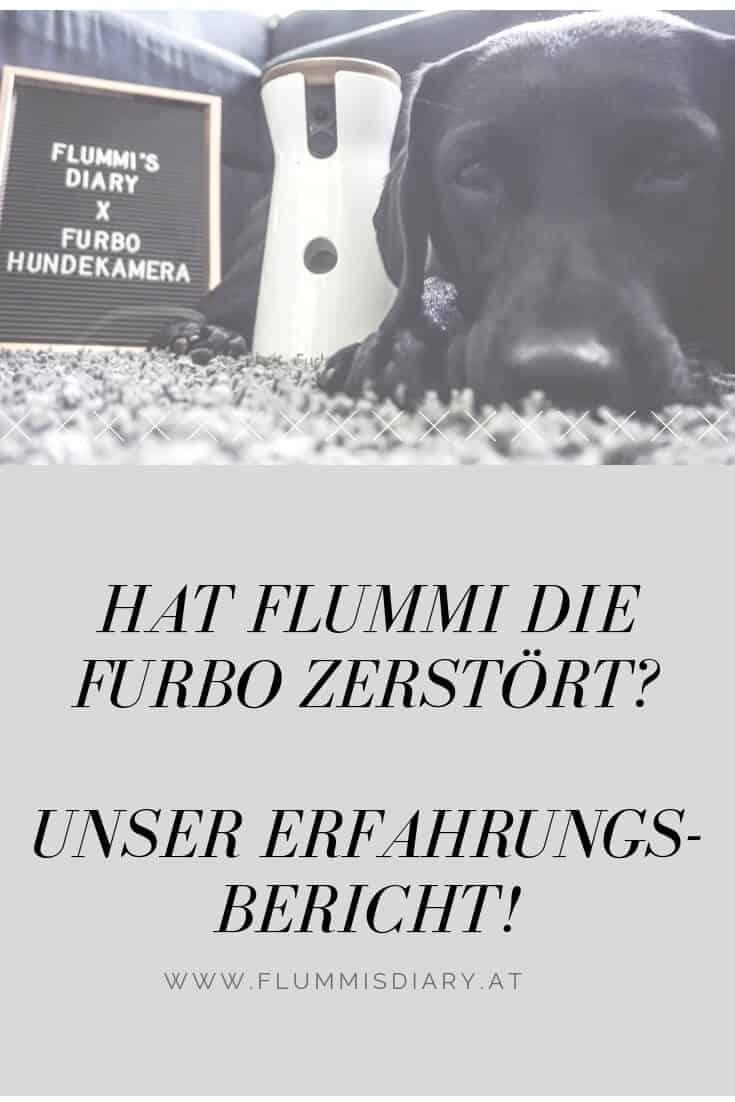 pinterest-furbo-hund-allein