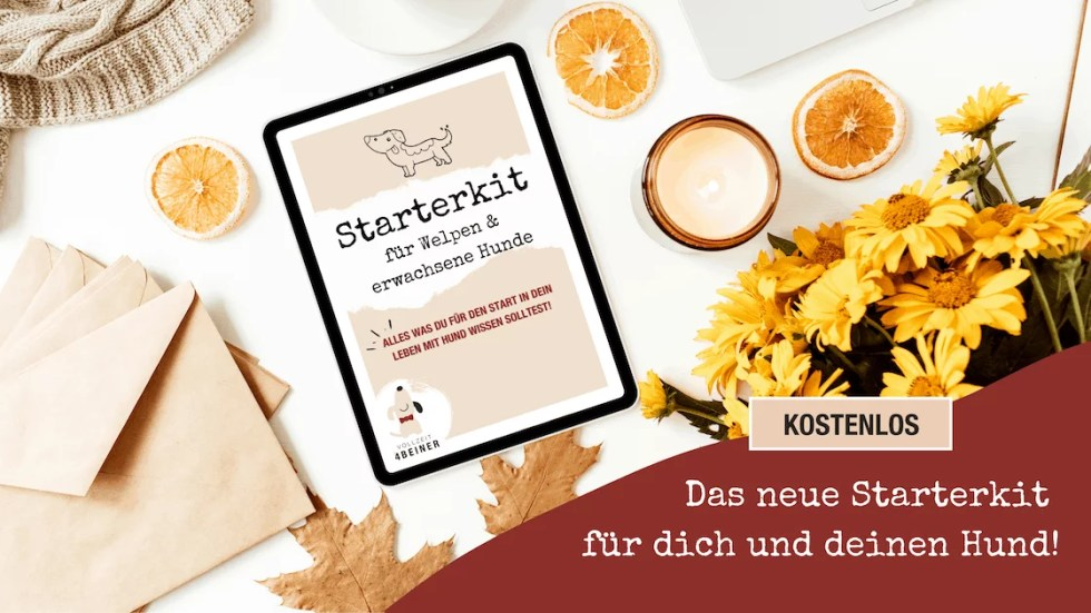 starterkit-fuer-hunde-welpen-hundetrainer-hundeblog-vollzeit4beiner-flummsidiary