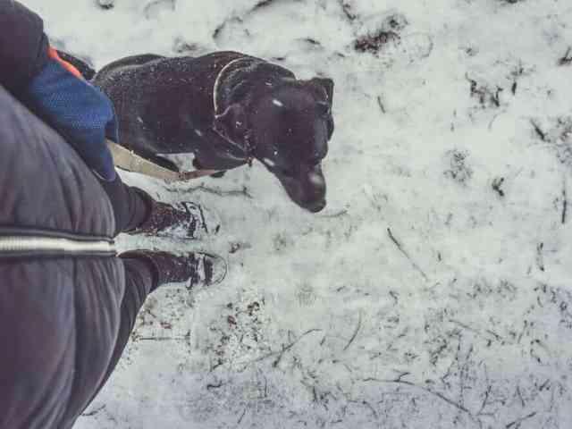 bindung-hund-trainieren-training-aufbauen