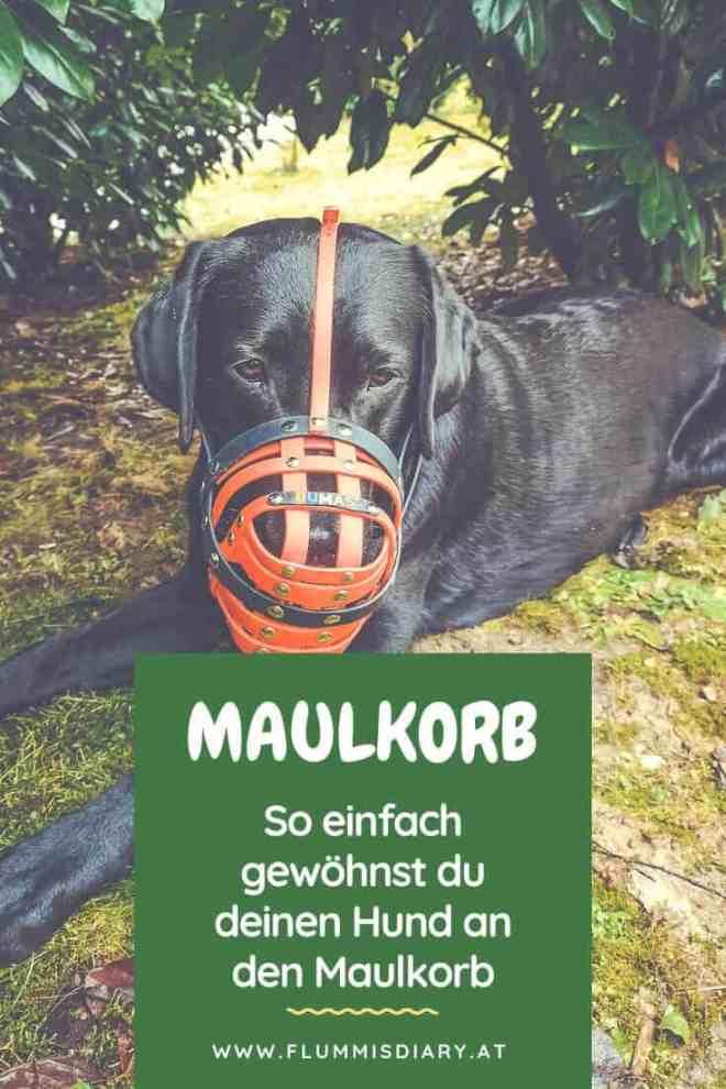 maulkorb-training-hund