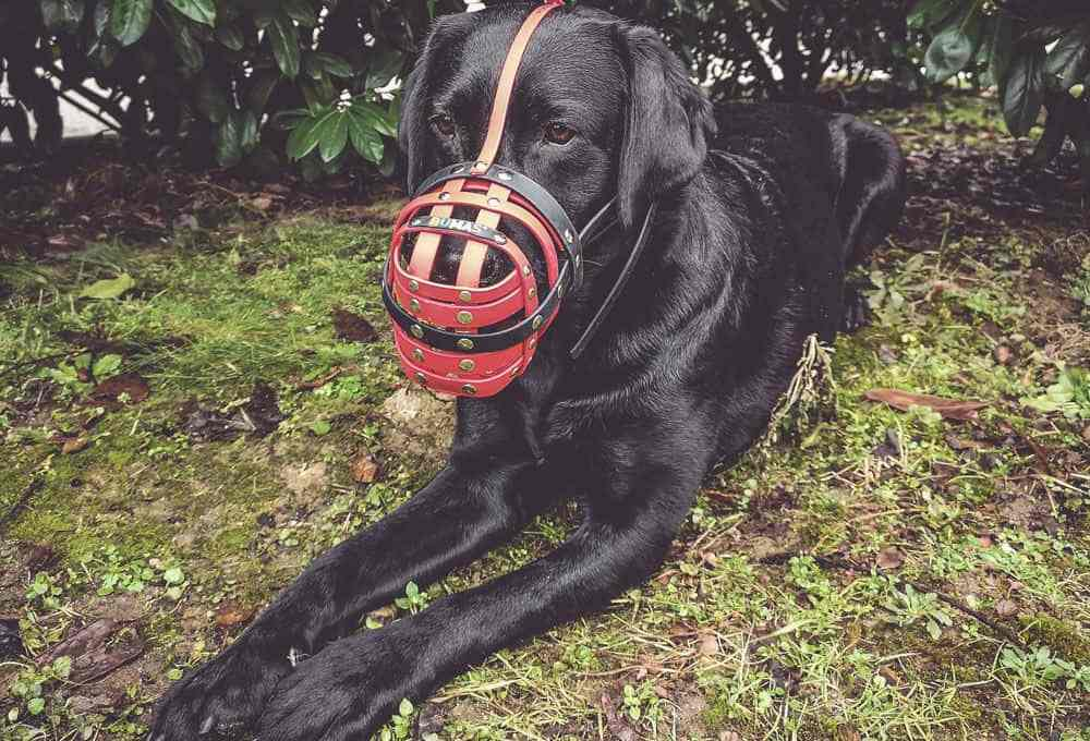 maulkorb-training-tipps-hund