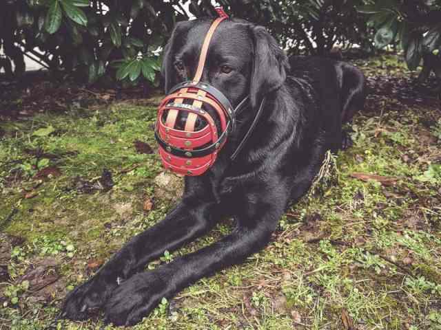maulkorb-training-tipps-hund