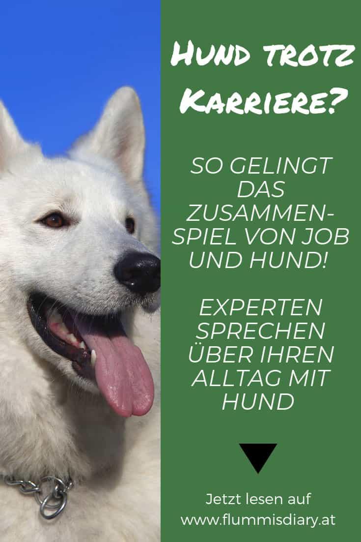 hund-job-vereinbaren-wie