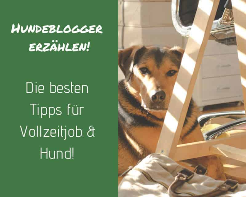 hundeblogger-erzaehlen-tipps