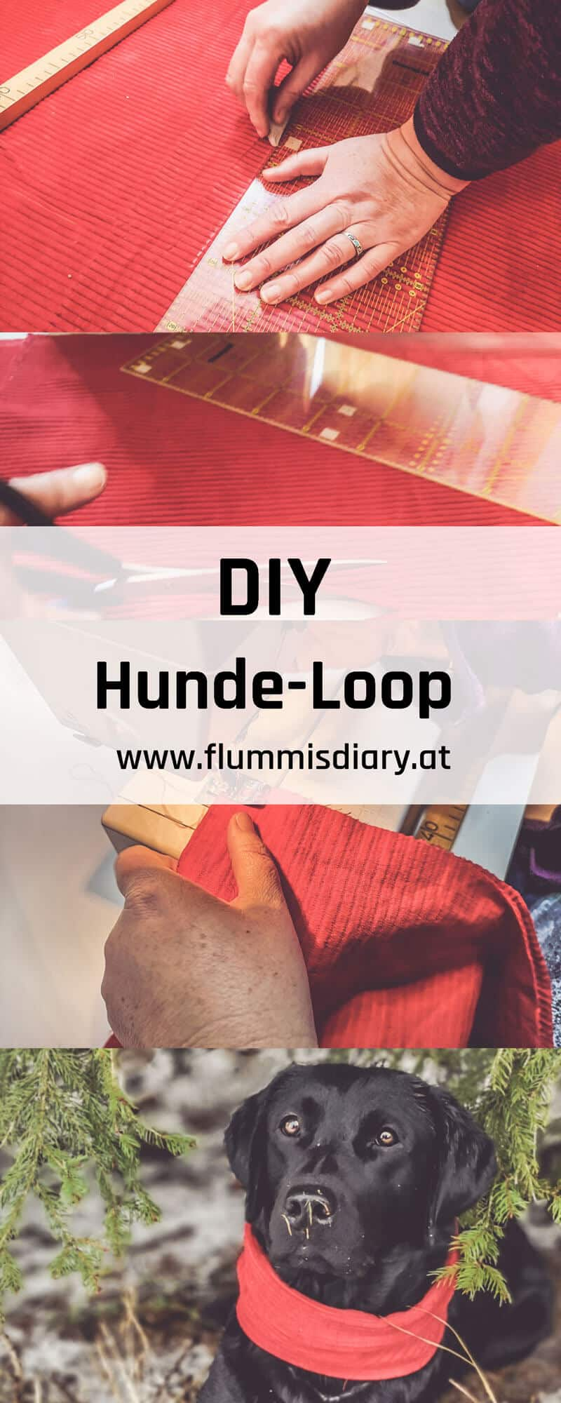 pinterest-dog-loop-diy