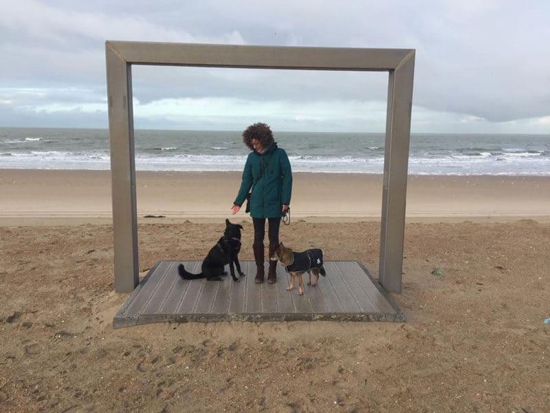 dreipunktecharlie-interview-vollzeitjob-hund