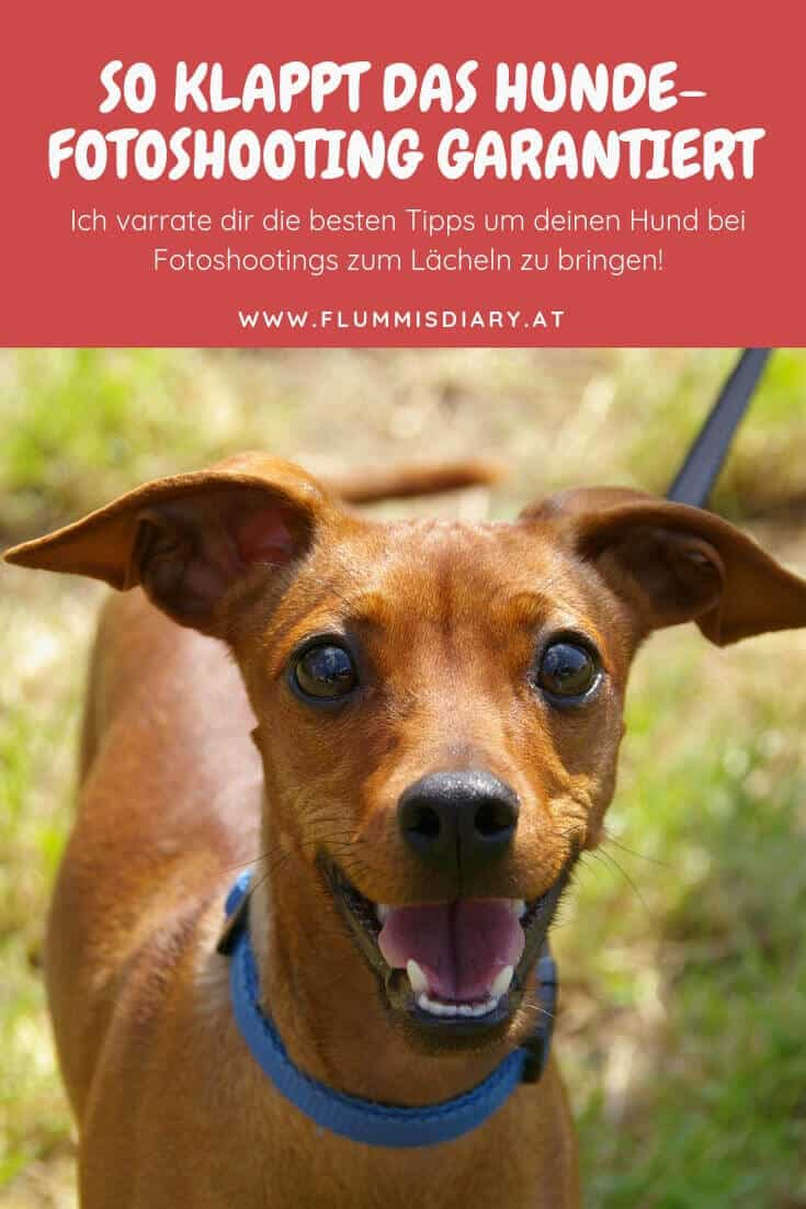 fotoshooting-hund-foto-tipps