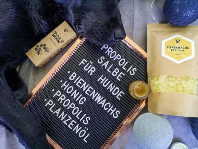 propolis-salbe-hund-honig-beegut