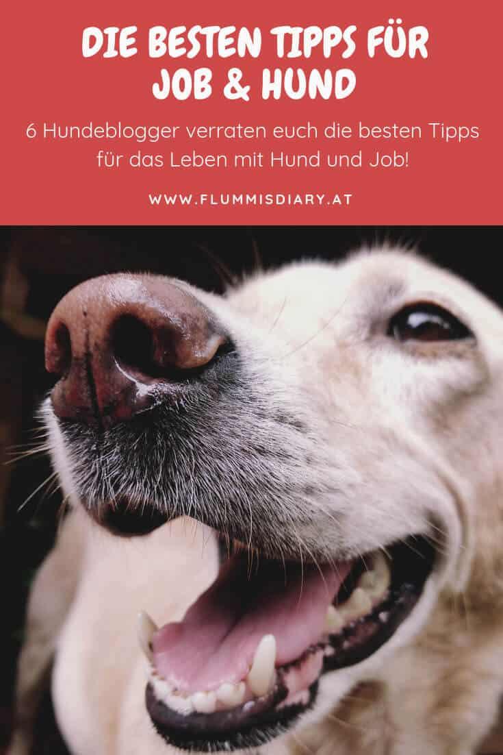 tipps-job-hund-arbeit