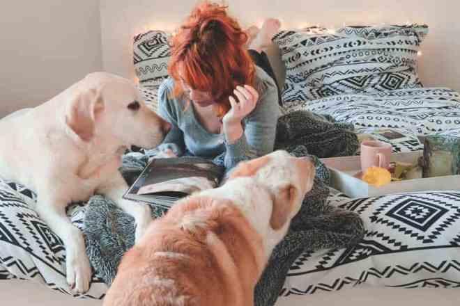 vet-dogs-vollzeitjob-hund-interview