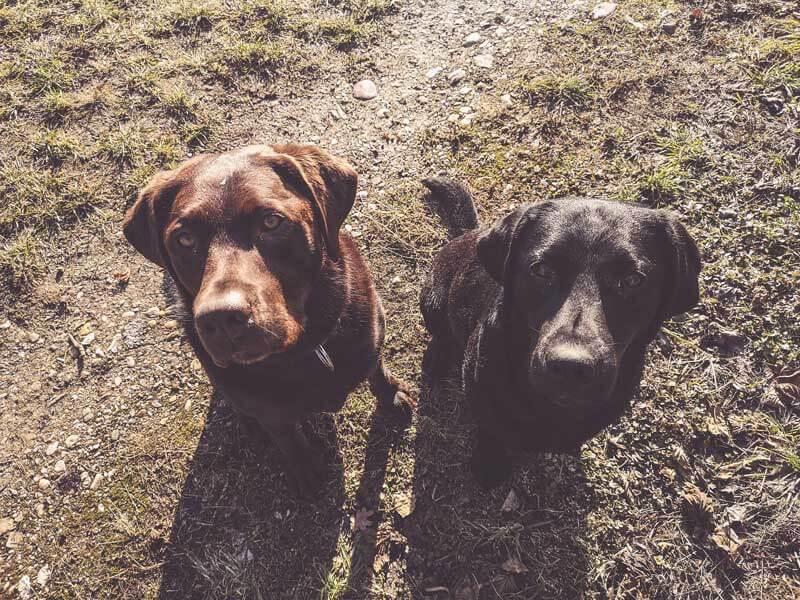 flummi-hundetagesstätte-erfahrung