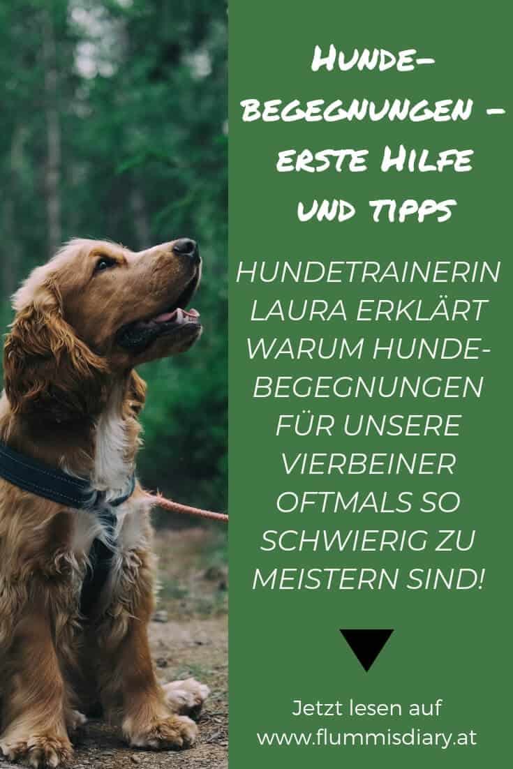 hundebegegnungen-leine-problem-hundetrainer