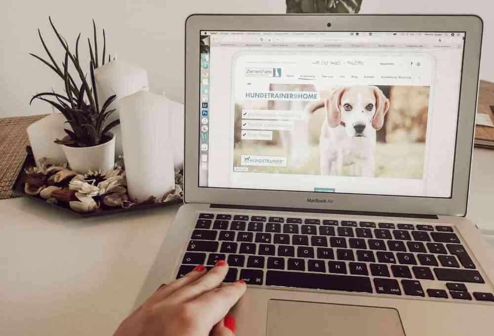 hundetrainer-ausbildung-ziemer-falke-blog