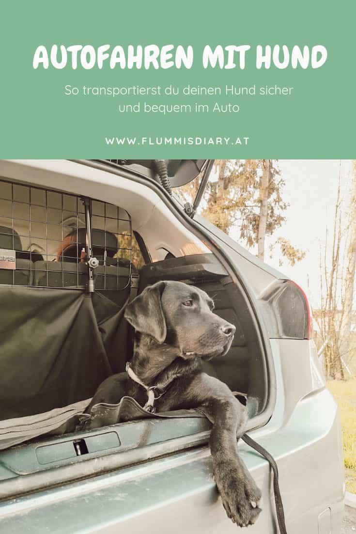 autofahren-mit-hund-tipps-flummis-diary