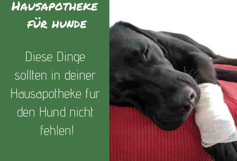 hausapotheke-hund-apotheke