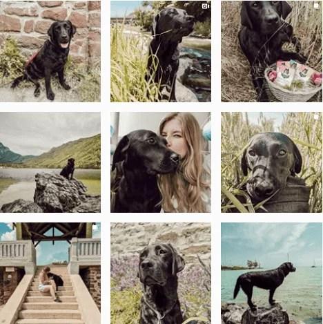 flummisdiary-#adventuredogs-instagram-inspiration
