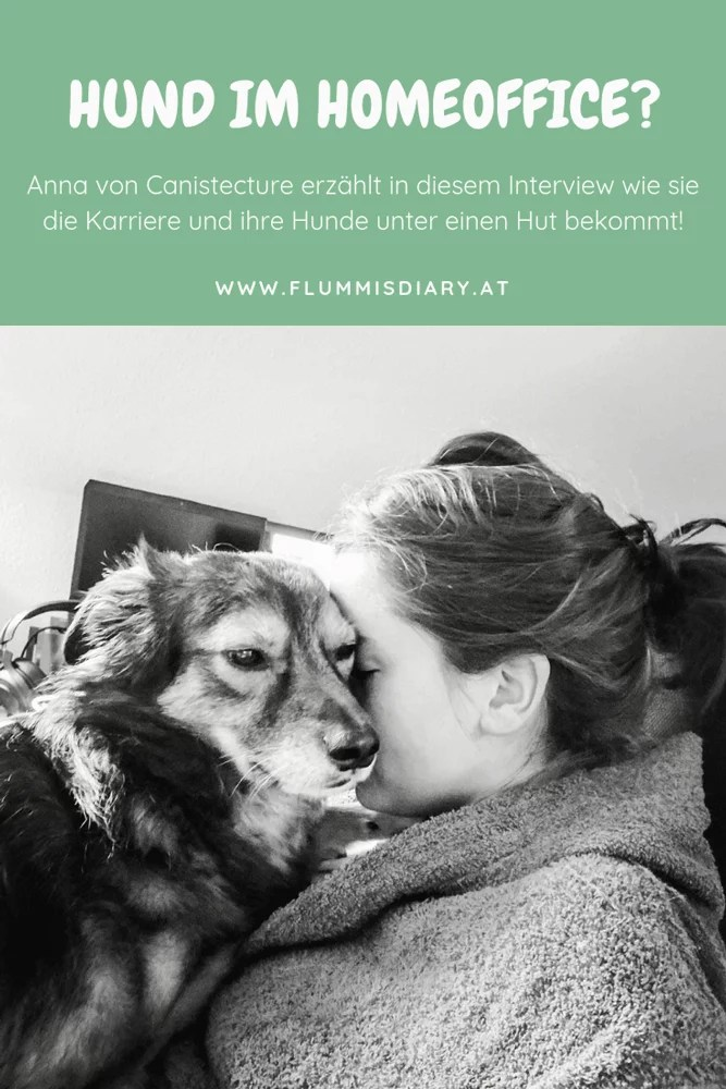 home-office-hund-tipps-dog-karriere