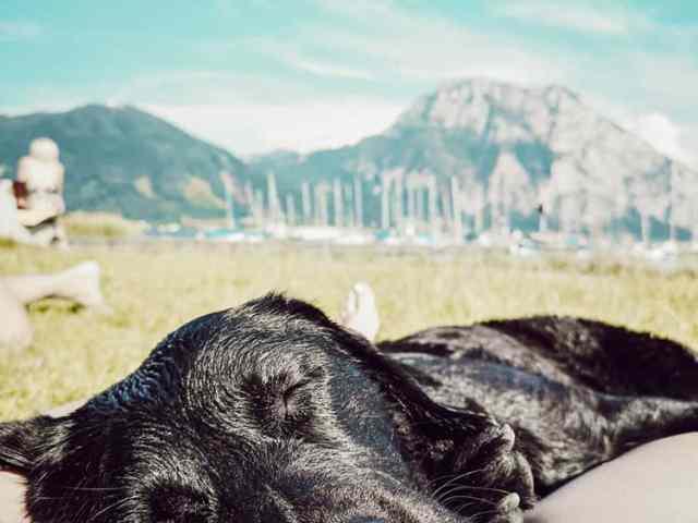 baden-hund-im-sommer-strand