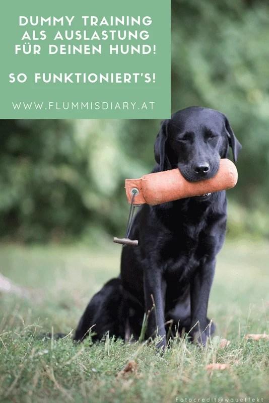 dummytraining-hund-auslastung-schritt-fuer-schritt