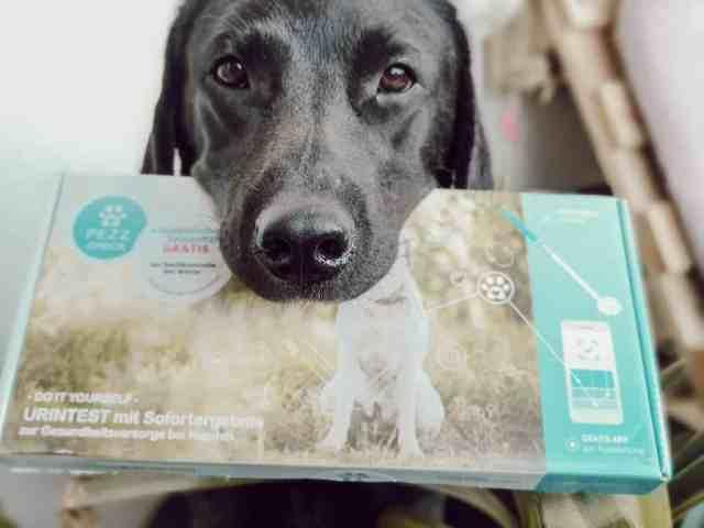 gesund-hund-check-test-pezz-life