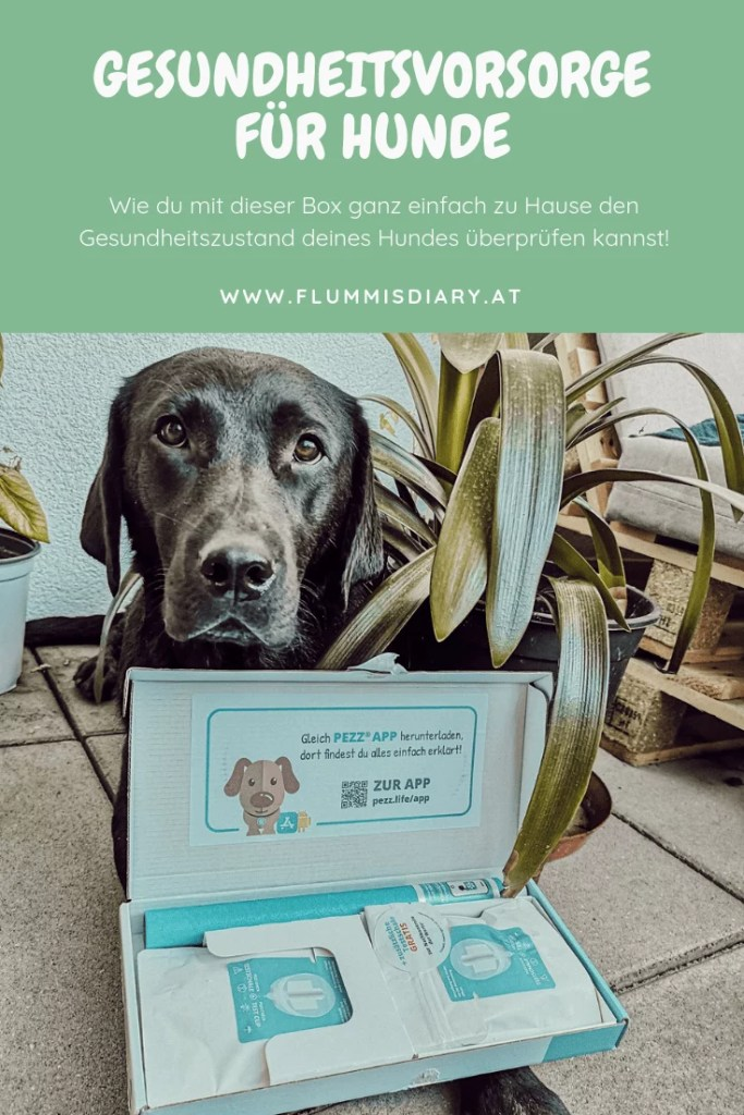 gesundheit-hund-test-urintest-pezz-check