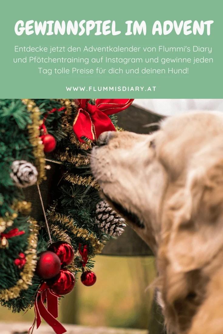 hundeadventkalender-adventskalender-hunde-dog