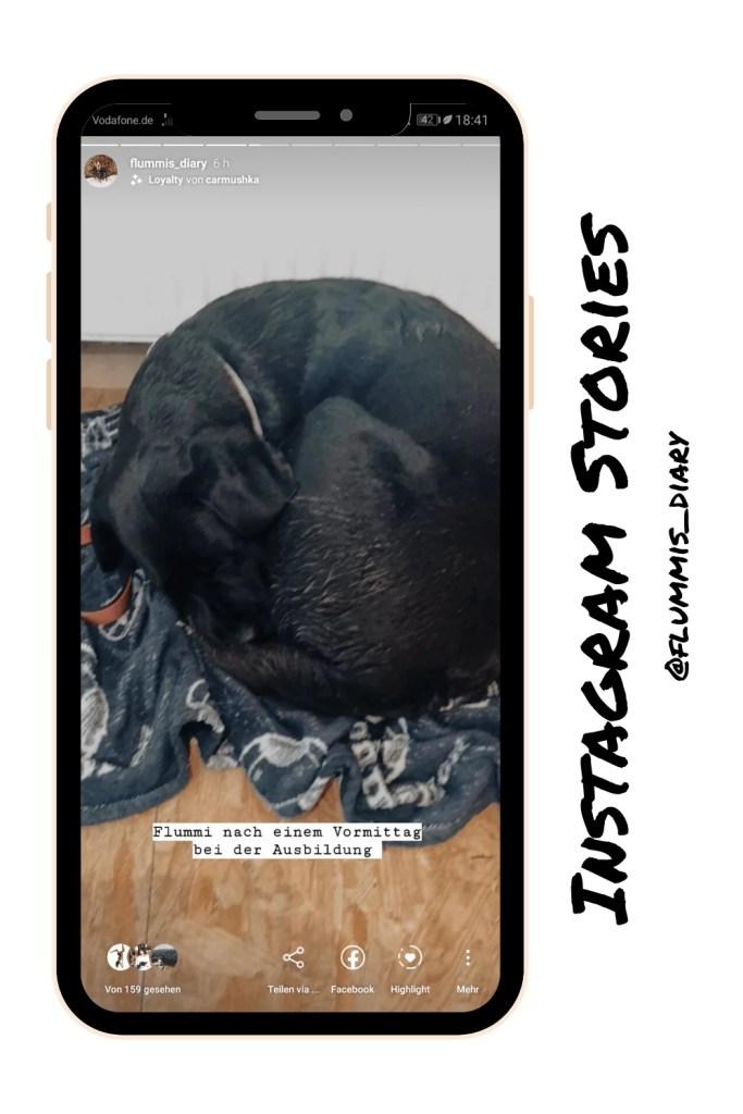 hundblogger-instagram-tipps-profil