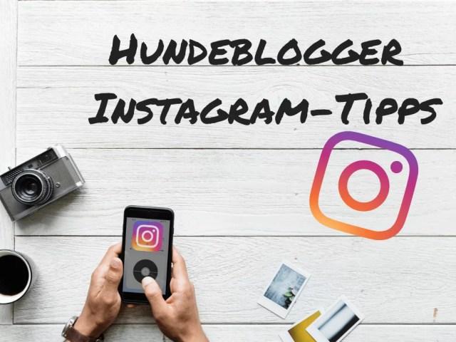 hunde-blogger-instagram-tipps-hilfe-hundeblogger-werden