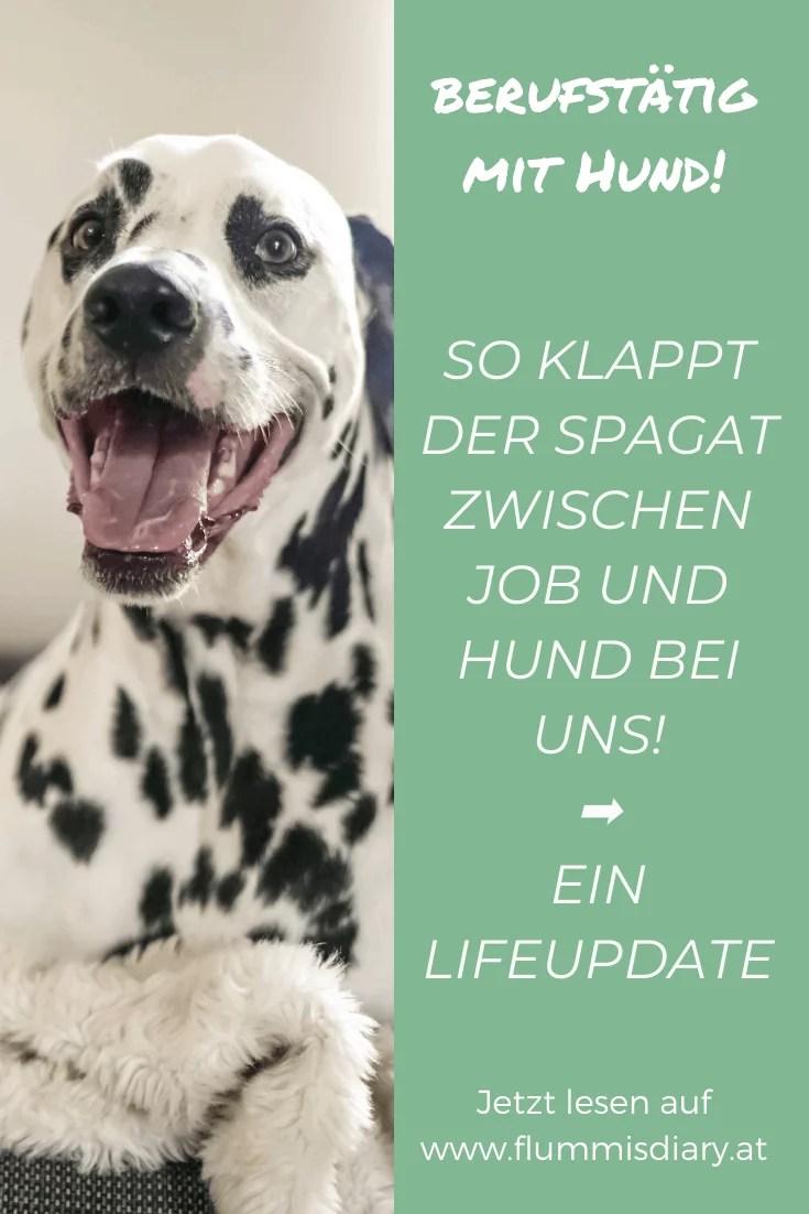 berufstaetig-mit-hund-job-arbeiten-vollzeitjob-lifeupdate