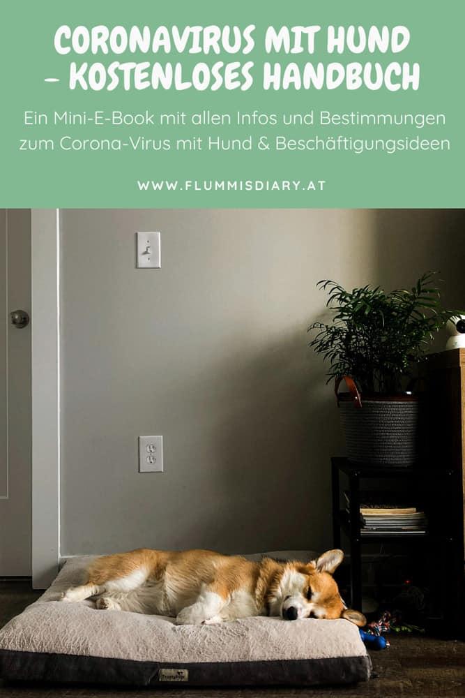 ebook-coronavirus-hund-auslastung-beschaeftigung-oesterreich-info-corona