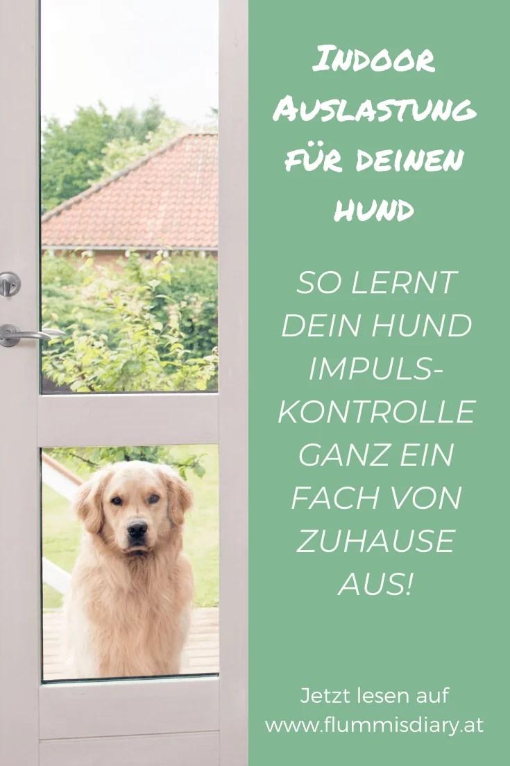 impulskontrolle-indoor-auslastung-hund-uebungen-training