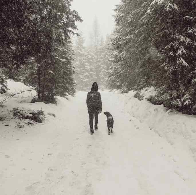 zillertal-mit-hund-im-winter-erfahrungen-tipps-ausfluege
