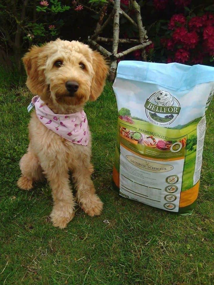 bellfor-hundefutter-artgerecht
