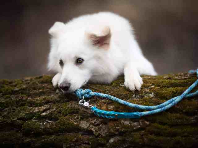 hundefotos-tipps-fotografin-waueffekt